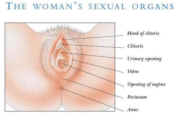 Womens Sex Organ 20